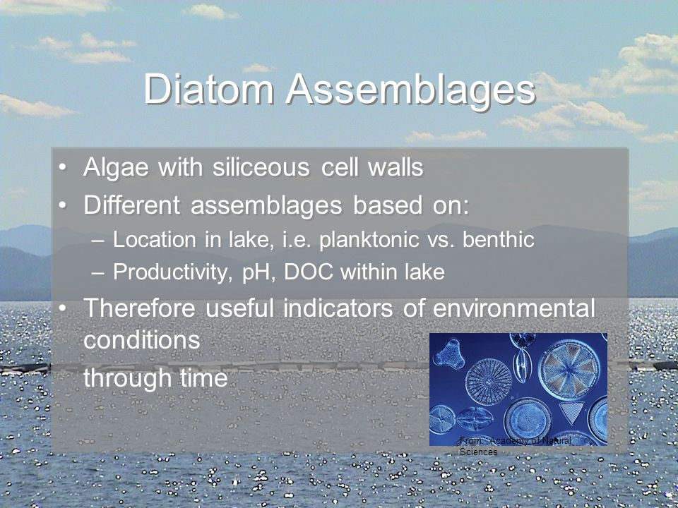 Diatom Assemblages Algae with siliceous cell walls