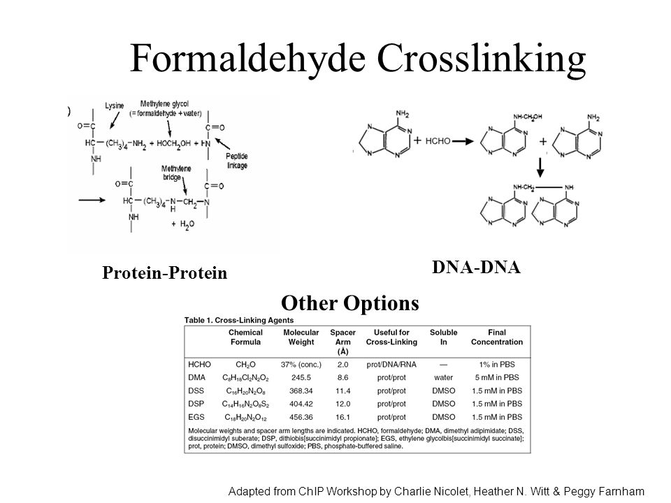 formaldehyde crosslinking protein dna relationship