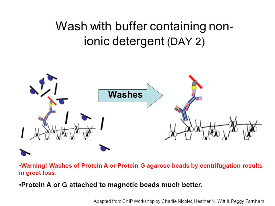 Wash with buffer containing non-ionic detergent (DAY 2)