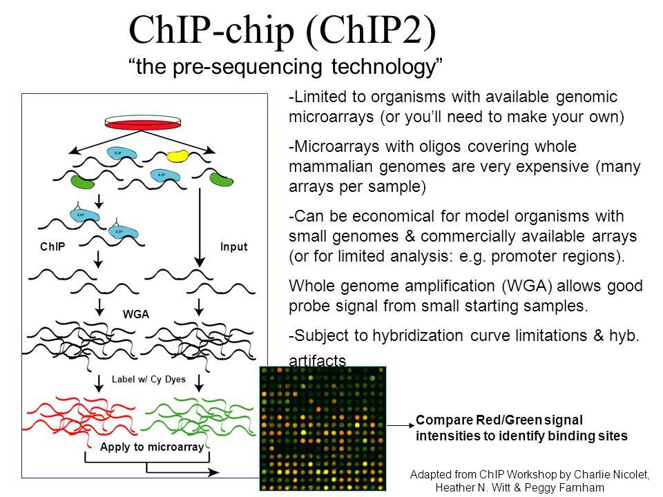 ChIP-chip (ChIP2) the pre-sequencing technology