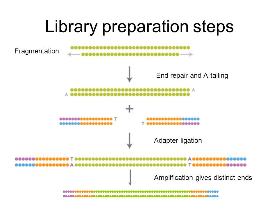 Library preparation steps