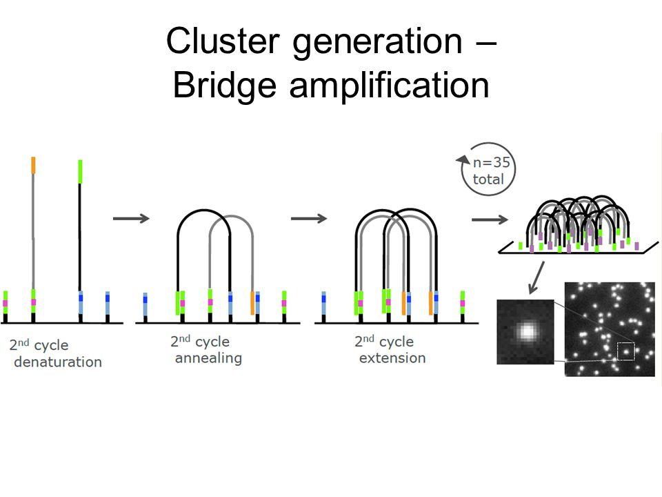 Cluster generation – Bridge amplification