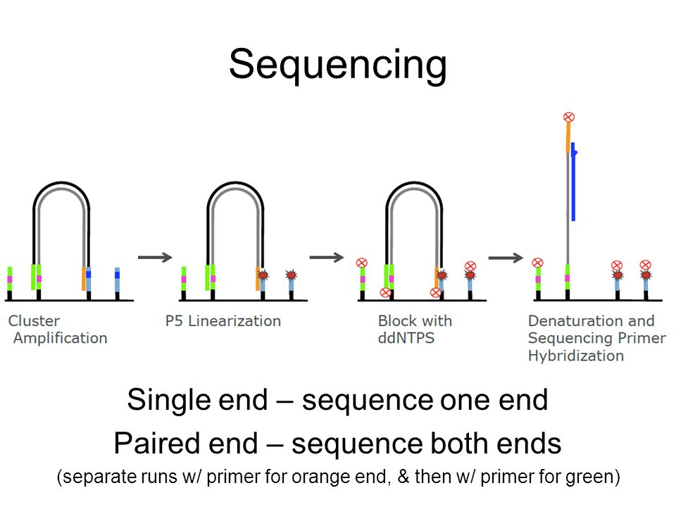 Sequencing Single end – sequence one end