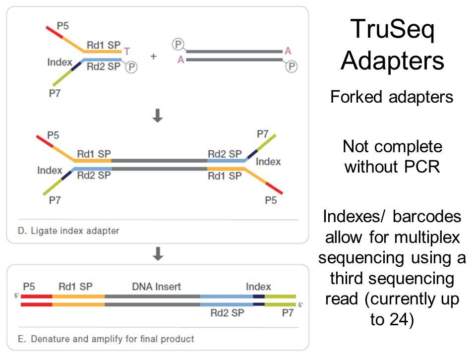 TruSeq Adapters