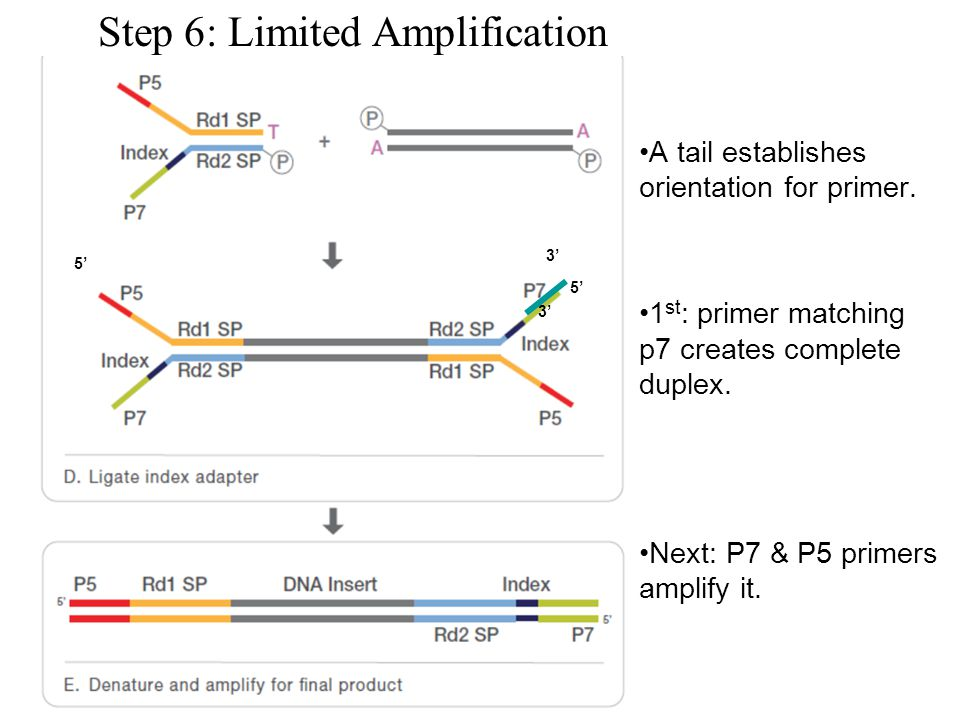 Step 6: Limited Amplification