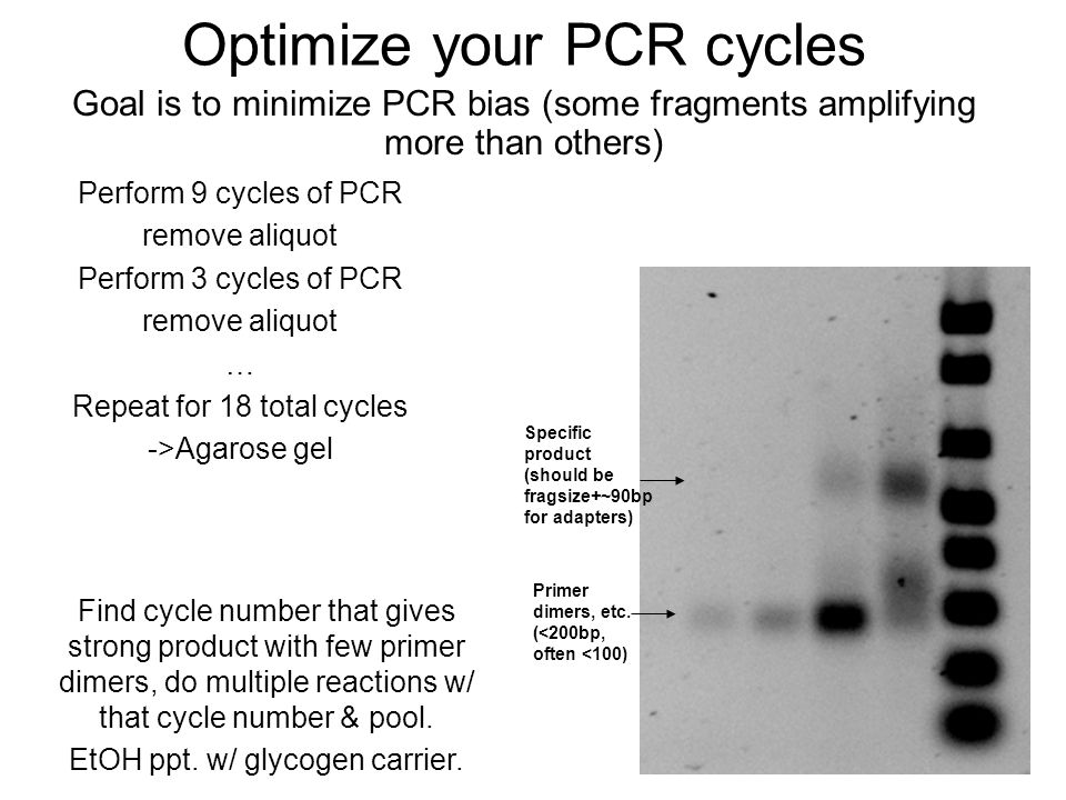 Optimize your PCR cycles