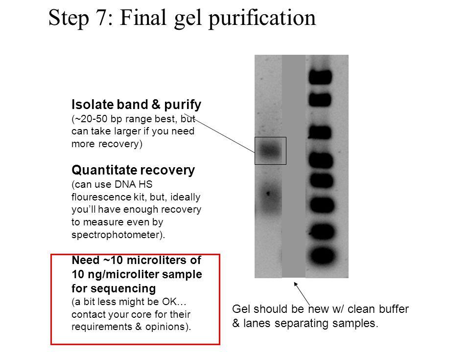 Step 7: Final gel purification