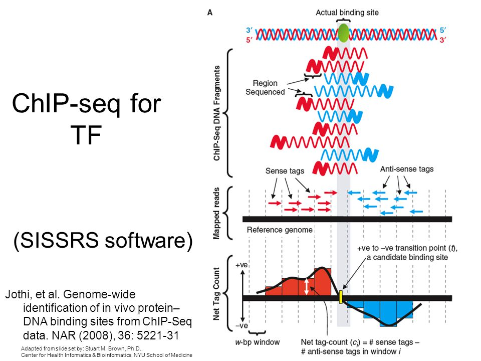 ChIP-seq for TF (SISSRS software)