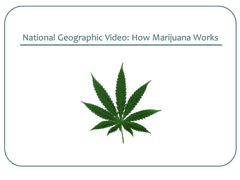 National Geographic Video: How Marijuana Works