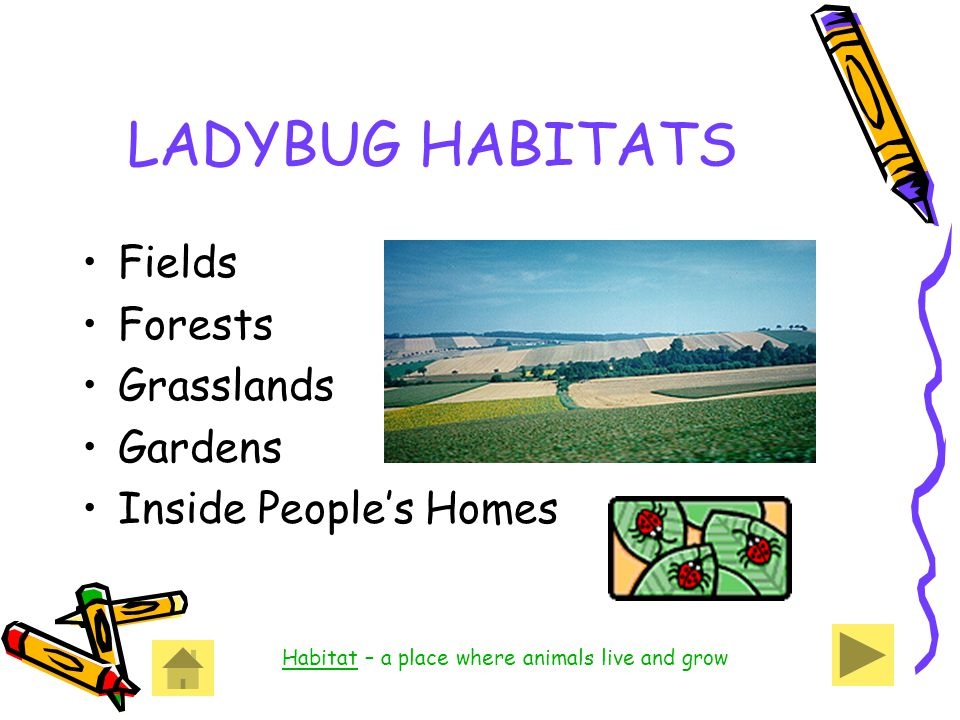 LADYBUG HABITATS Fields Forests Grasslands Gardens