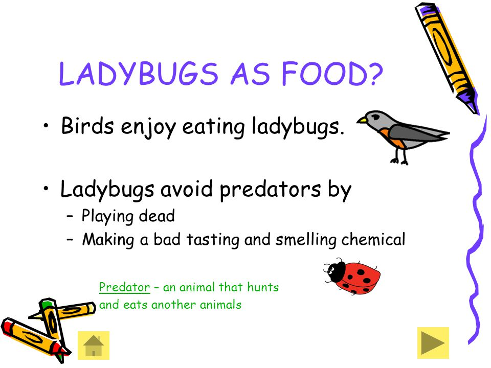 LADYBUGS AS FOOD Birds enjoy eating ladybugs.