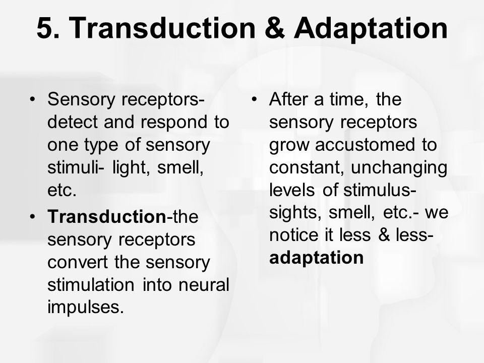 5. Transduction & Adaptation