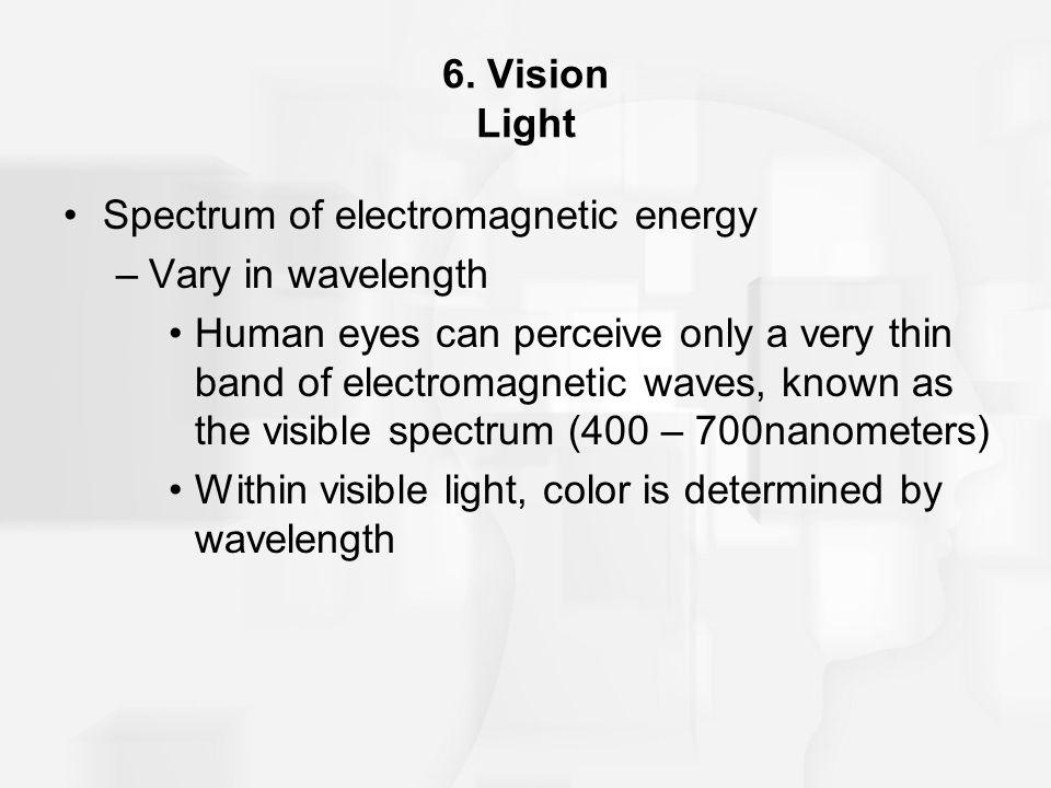 6. Vision Light Spectrum of electromagnetic energy. Vary in wavelength.