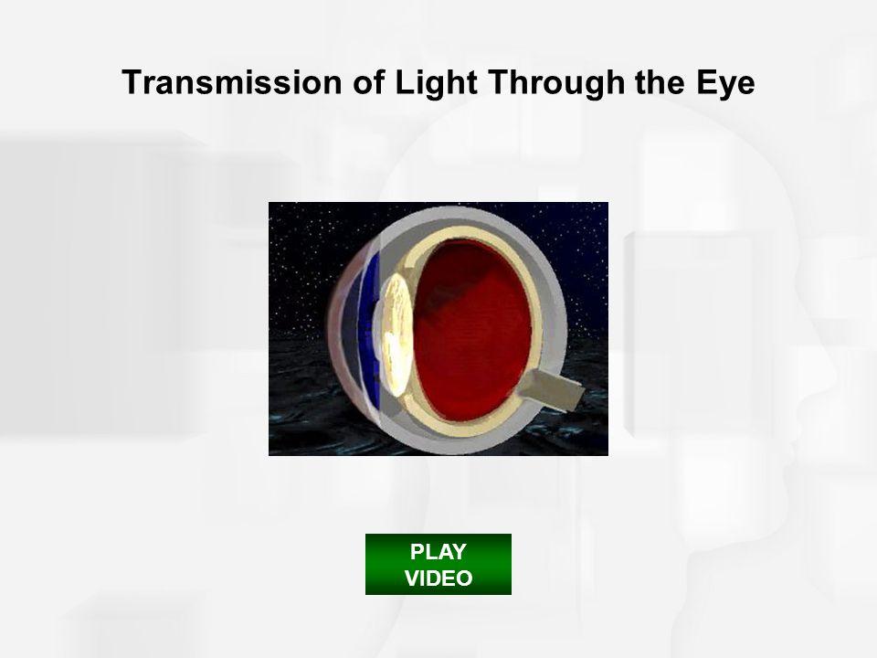 Transmission of Light Through the Eye