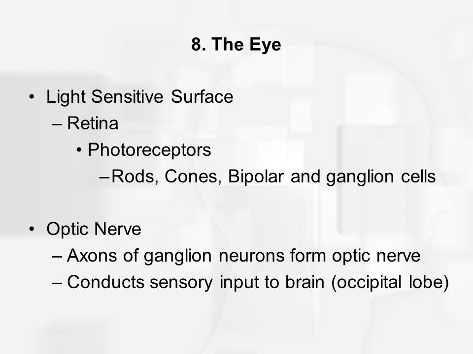 8. The Eye Light Sensitive Surface. Retina. Photoreceptors. Rods, Cones, Bipolar and ganglion cells.