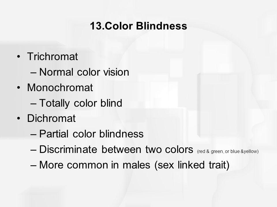 13.Color Blindness Trichromat. Normal color vision. Monochromat. Totally color blind. Dichromat.