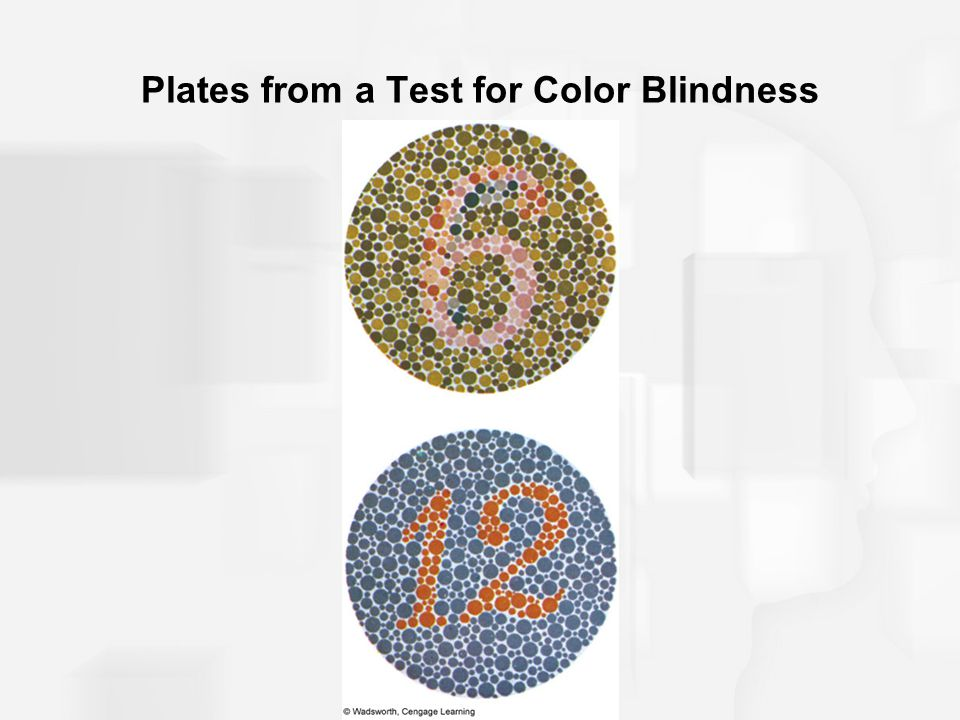 Plates from a Test for Color Blindness