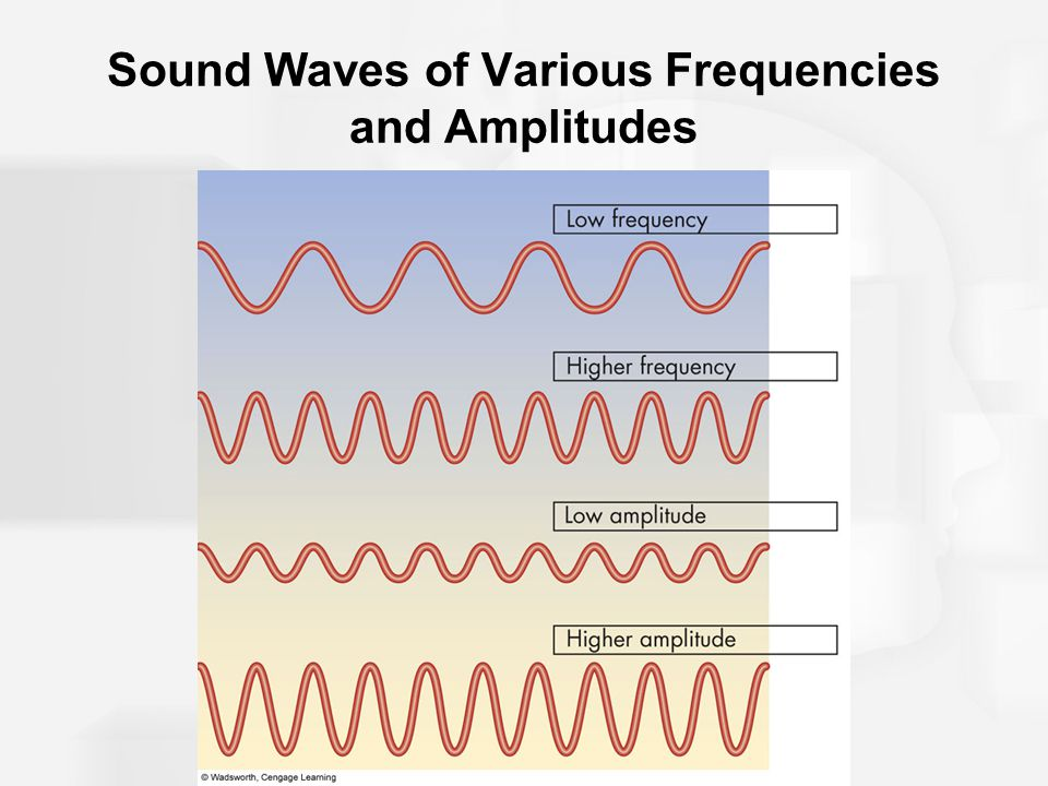 Sound Waves of Various Frequencies and Amplitudes