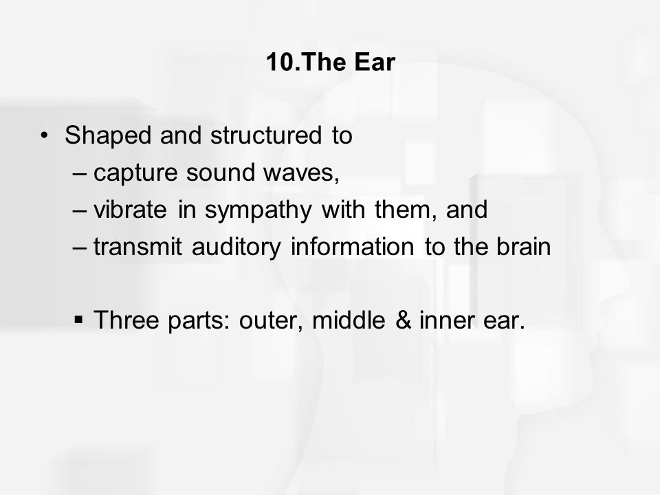 10.The Ear Shaped and structured to. capture sound waves, vibrate in sympathy with them, and. transmit auditory information to the brain.