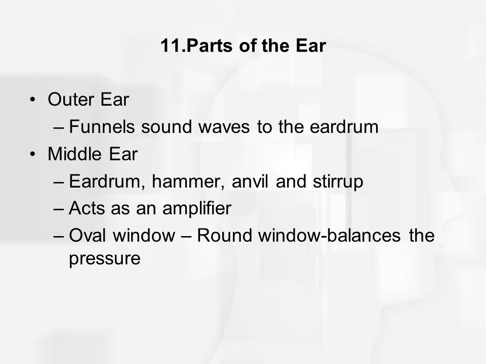 11.Parts of the Ear Outer Ear. Funnels sound waves to the eardrum. Middle Ear. Eardrum, hammer, anvil and stirrup.