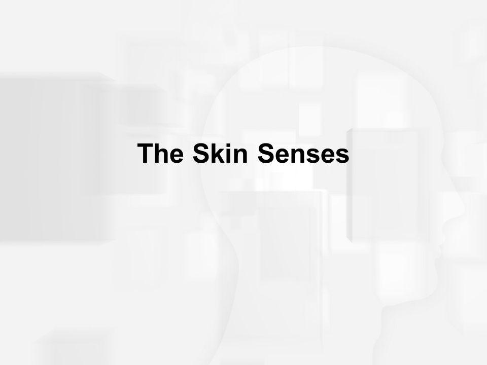 The Skin Senses