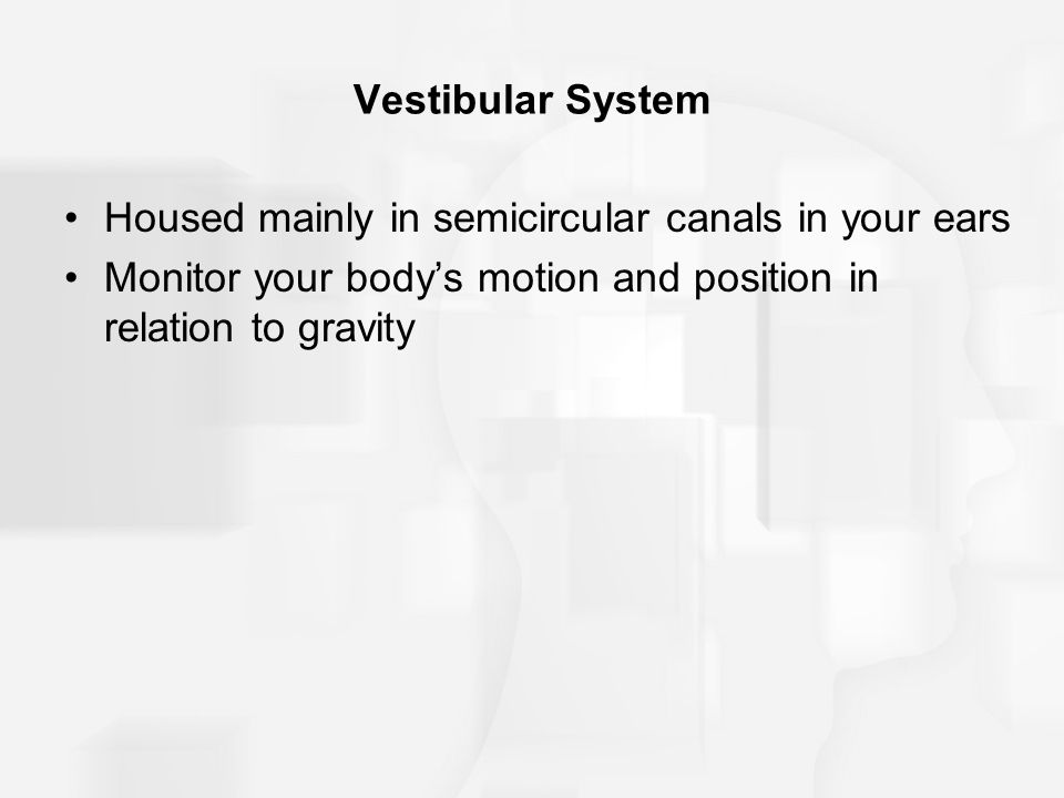 Vestibular System Housed mainly in semicircular canals in your ears.