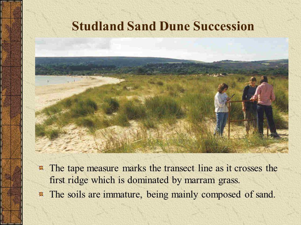 Studland Sand Dune Succession