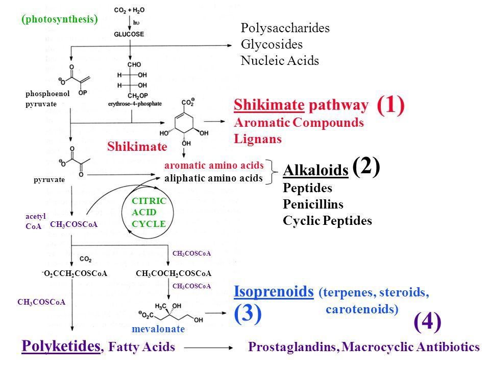 (1) (2) (3) (4) Shikimate pathway Alkaloids