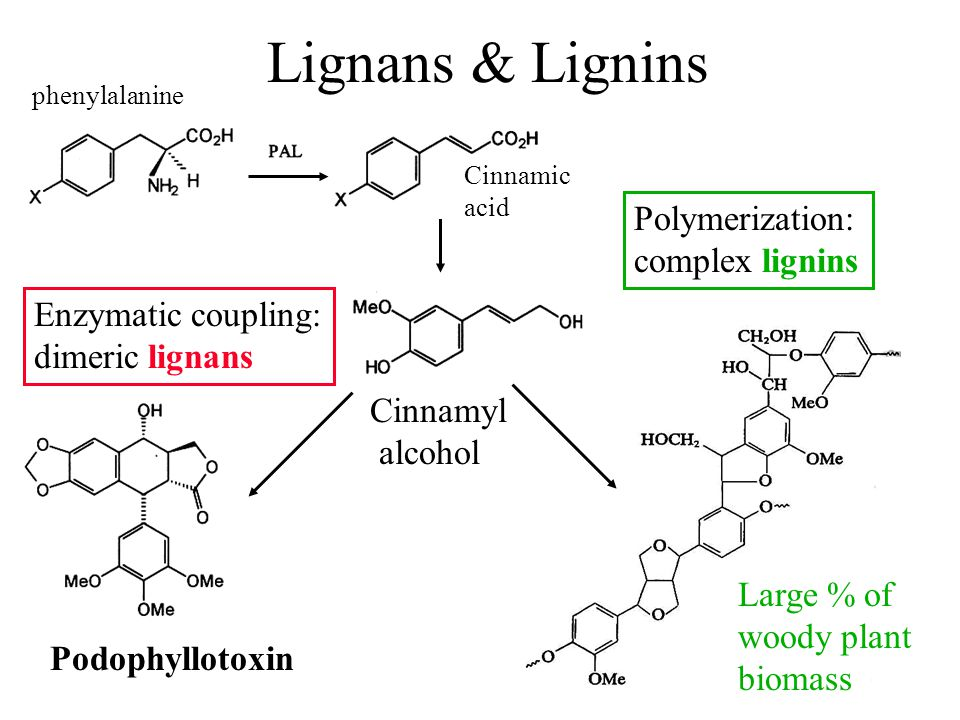 Lignans & Lignins Polymerization: complex lignins Enzymatic coupling: