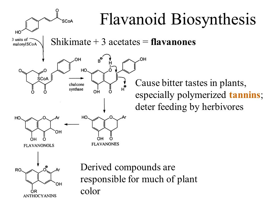 Flavanoid Biosynthesis