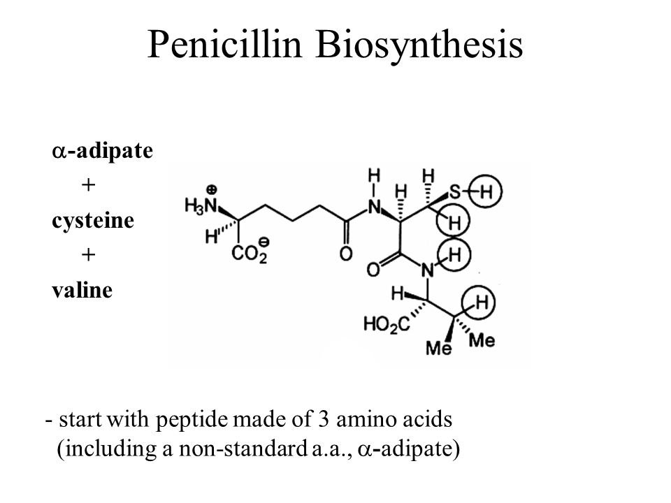 Penicillin Biosynthesis