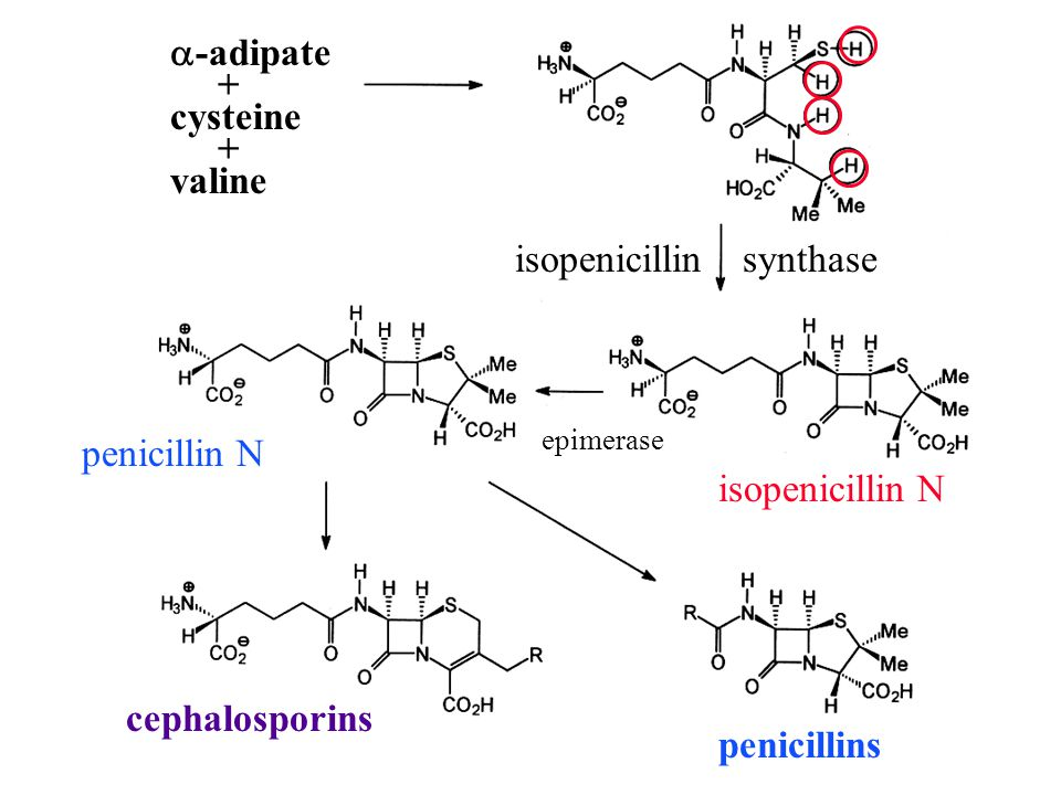 isopenicillin synthase