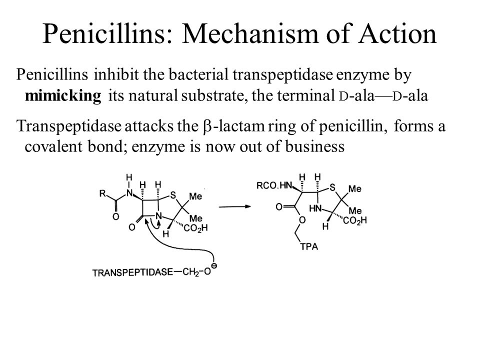 Penicillins: Mechanism of Action