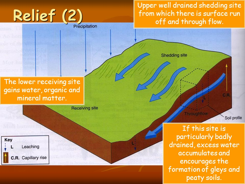 The lower receiving site gains water, organic and mineral matter.