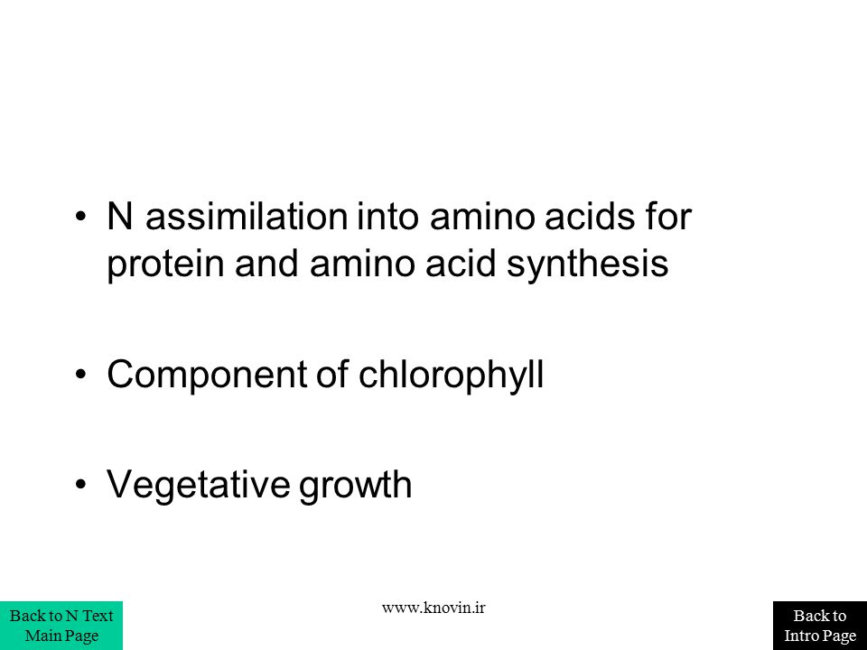N assimilation into amino acids for protein and amino acid synthesis
