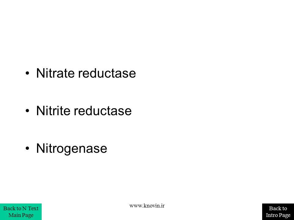 Nitrate reductase Nitrite reductase Nitrogenase www.knovin.ir