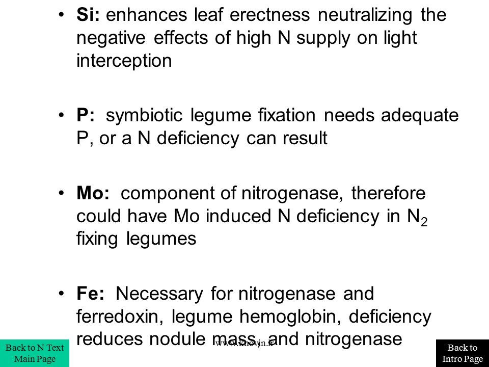 Si: enhances leaf erectness neutralizing the negative effects of high N supply on light interception