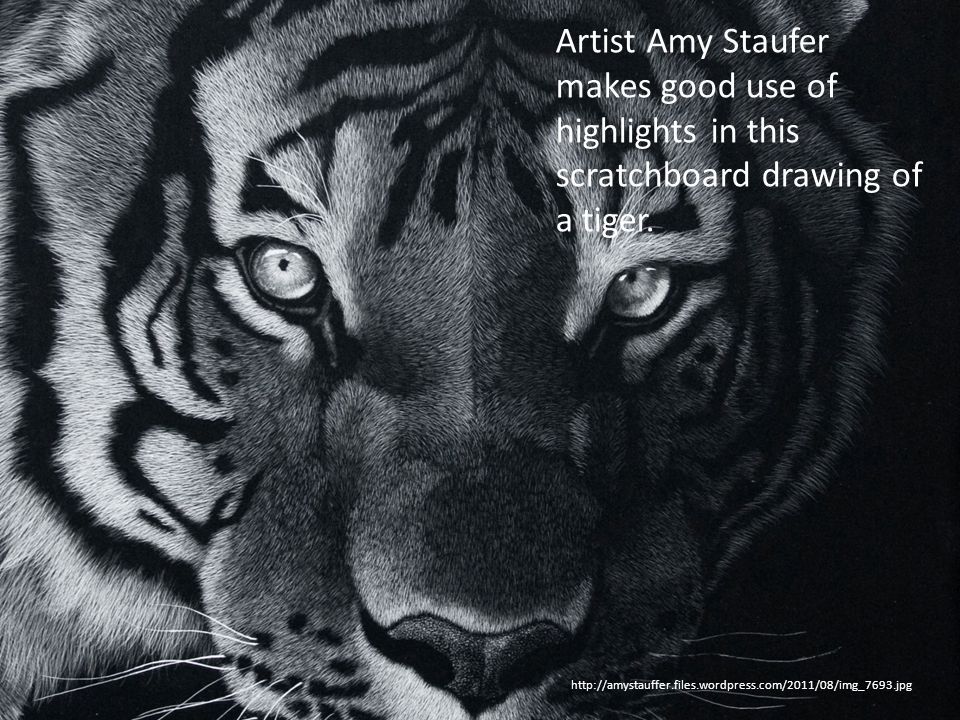 Artist Amy Staufer makes good use of highlights in this scratchboard drawing of a tiger.