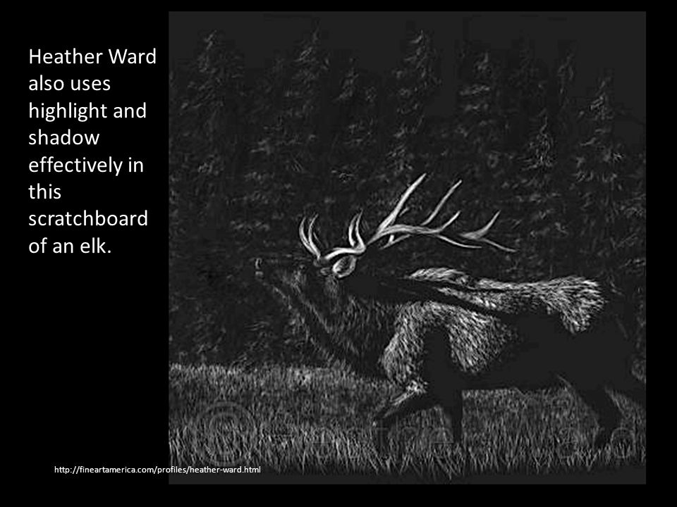 Heather Ward also uses highlight and shadow effectively in this scratchboard of an elk.