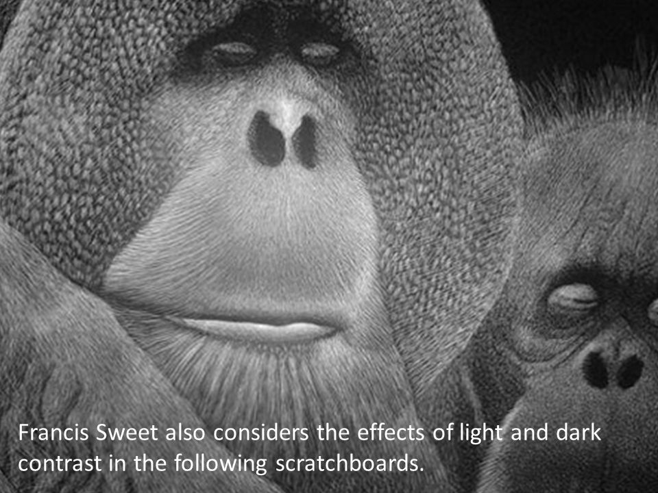 Francis Sweet also considers the effects of light and dark contrast in the following scratchboards.