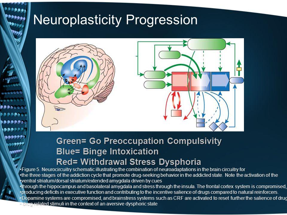 Neuroplasticity Progression