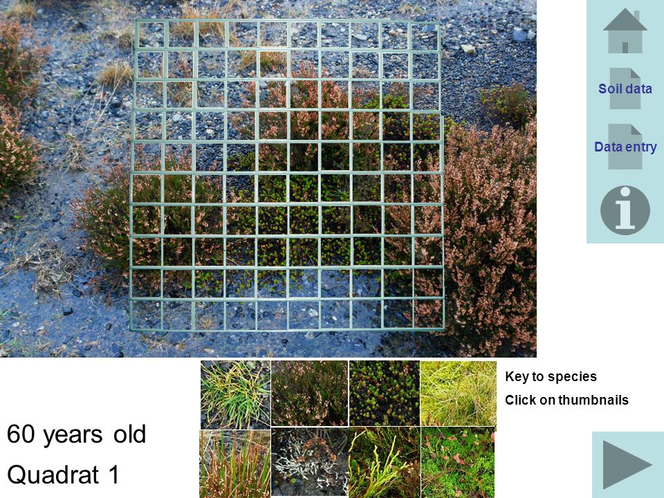 60 years old Quadrat 1 Soil data Data entry Key to species