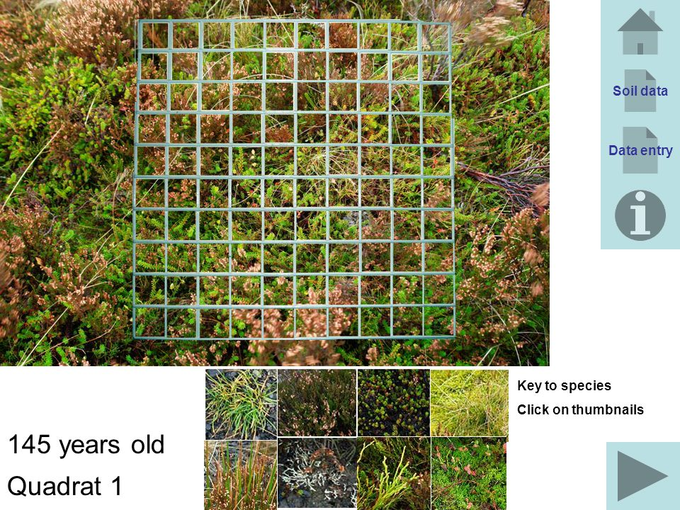 145 years old Quadrat 1 Soil data Data entry Key to species