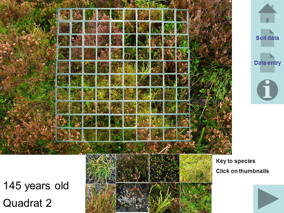 145 years old Quadrat 2 Soil data Data entry Key to species