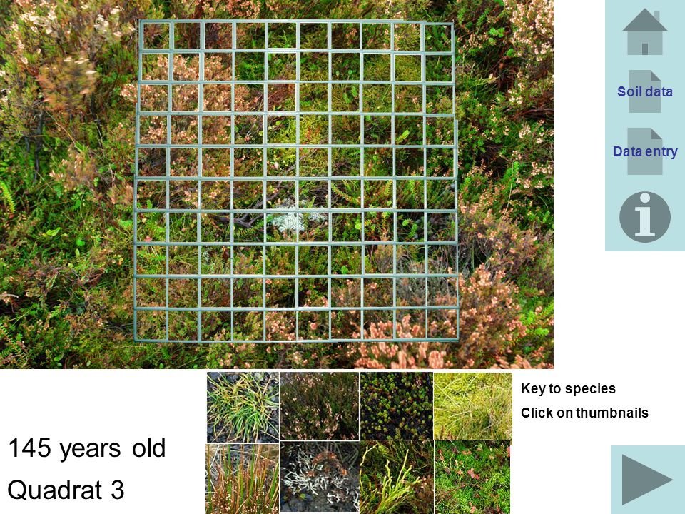145 years old Quadrat 3 Soil data Data entry Key to species