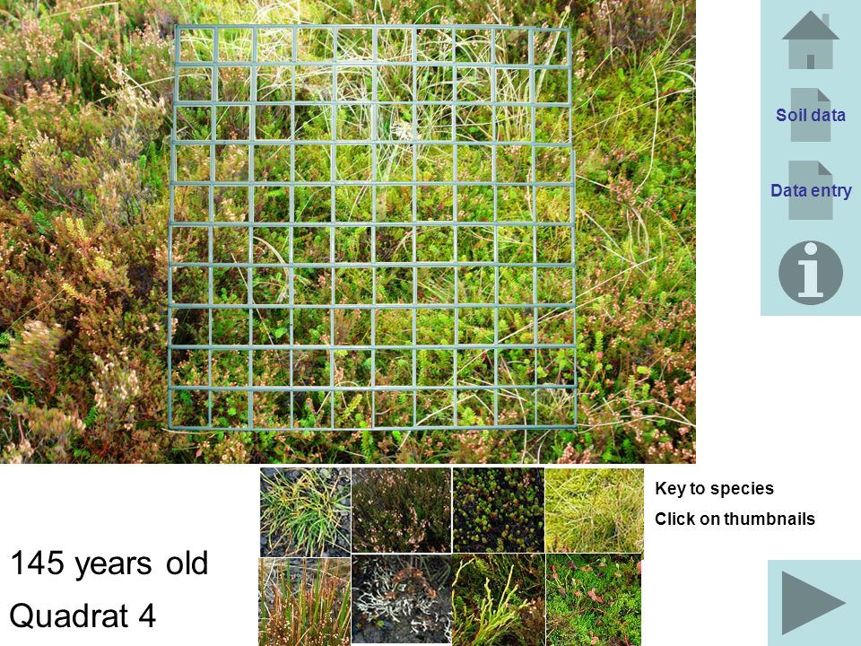 145 years old Quadrat 4 Soil data Data entry Key to species