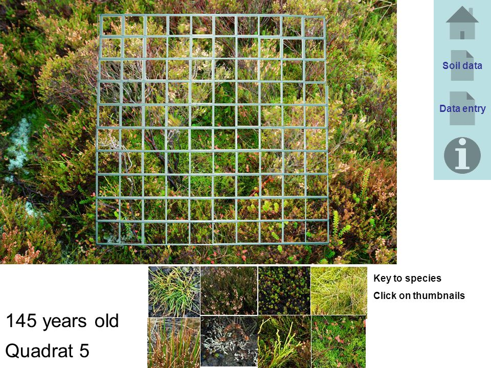 145 years old Quadrat 5 Soil data Data entry Key to species