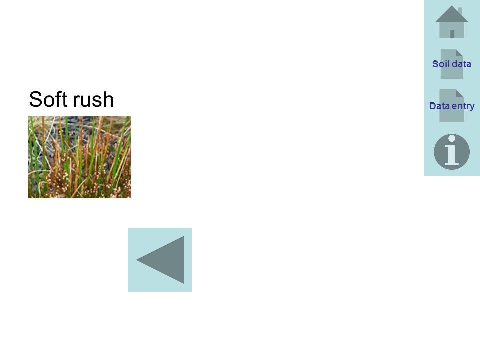 Soil data Soft rush Data entry