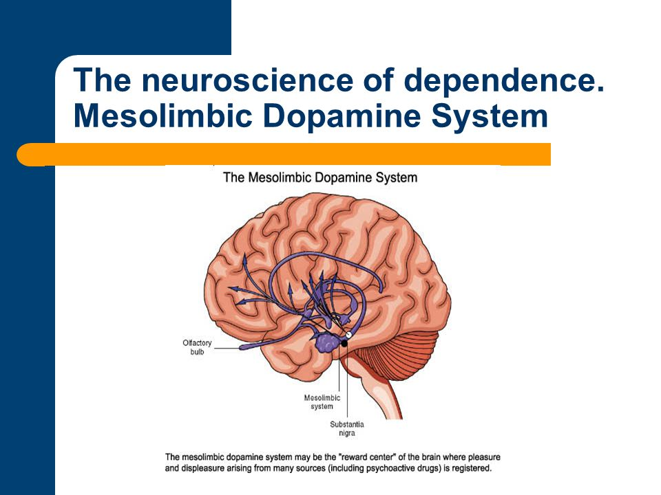 The neuroscience of dependence. Mesolimbic Dopamine System