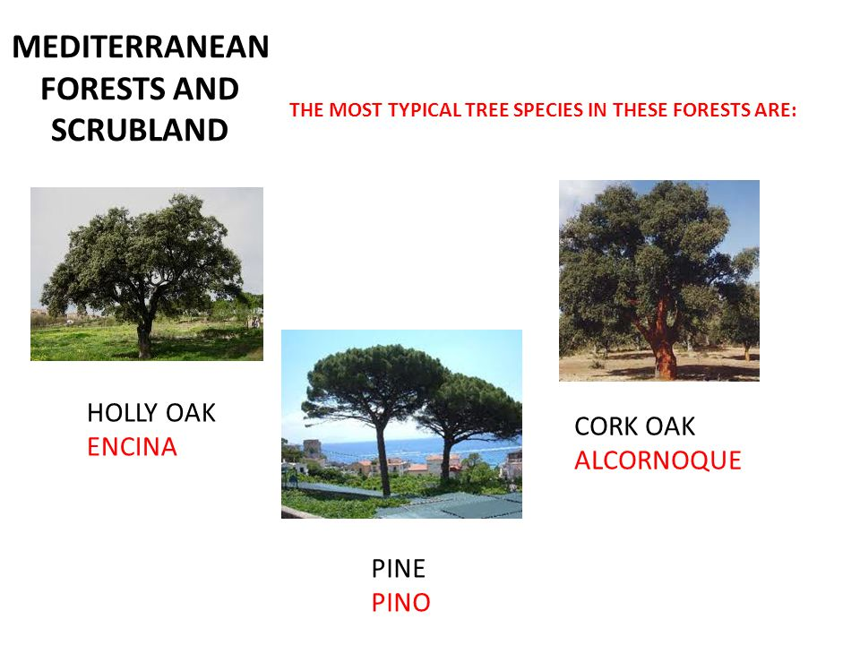 MEDITERRANEAN FORESTS AND SCRUBLAND